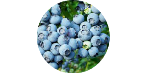 Blueberry (CAP)