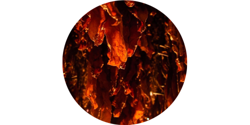 Red Burley (FLV)