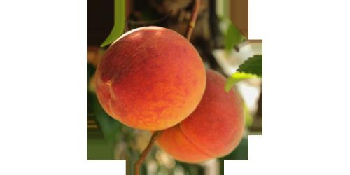 Peach (LB)