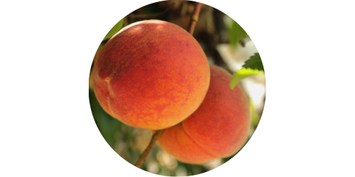Peach (FLV)