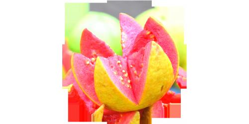 Pink Guava (FLV)