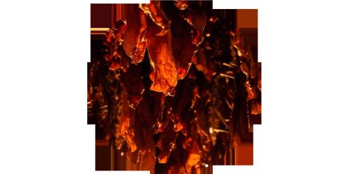 Red Burley Tobacco (FLV)