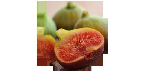 Fig (FW)