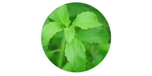 Sucre de Hippie (Stevia) (SaVapeur)